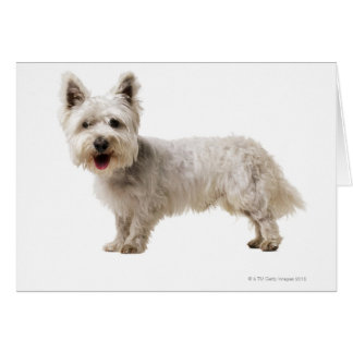 Close up of a terrier card