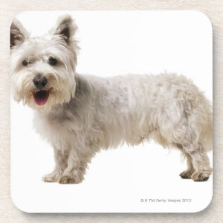 Close up of a terrier coaster