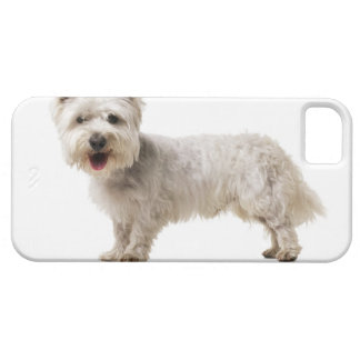 Close up of a terrier iPhone SE/5/5s case
