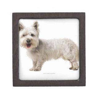 Close up of a terrier keepsake box