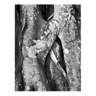 Close up of a tree postcard