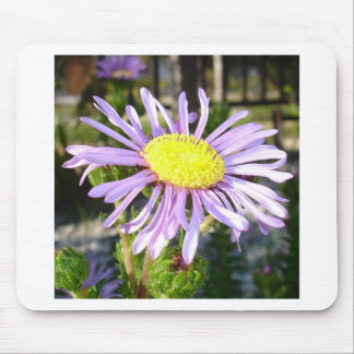 Close Up of A Violet Aster Flower Spring Bloom Mouse Pad