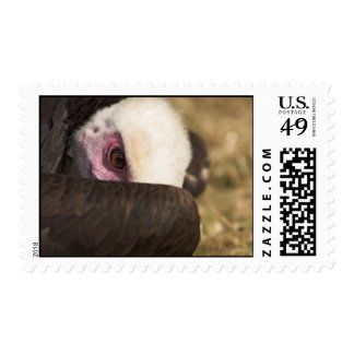 Close up of a Vulture Postage