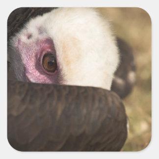 Close up of a Vulture Sticker