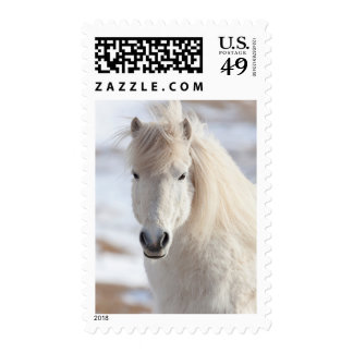 Close up of a White Icelandic Horse Postage