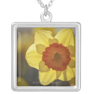 Close Up of a Yellow/Orange Daffodil Silver Plated Necklace