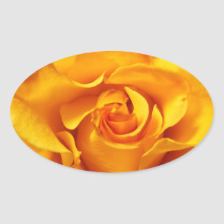 Close Up of a Yellow Rose Oval Sticker