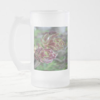 Close Up Of Aeonium Succulent With Garden Backgrou Frosted Glass Beer Mug