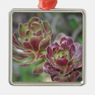 Close Up Of Aeonium Succulent With Garden Backgrou Metal Ornament
