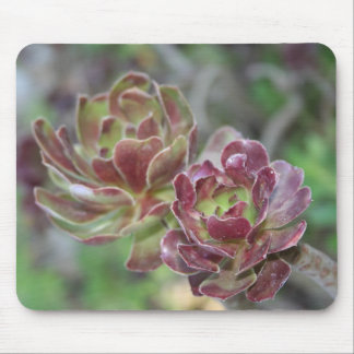 Close Up Of Aeonium Succulent With Garden Backgrou Mouse Pad