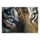 Close up of an adult male Sumatran Tiger Card