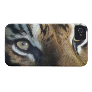 Close up of an adult male Sumatran Tiger iPhone 4 Case-Mate Cases