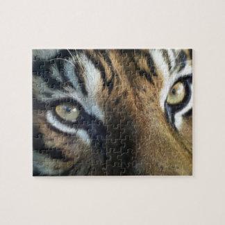 Close up of an adult male Sumatran Tiger Jigsaw Puzzle