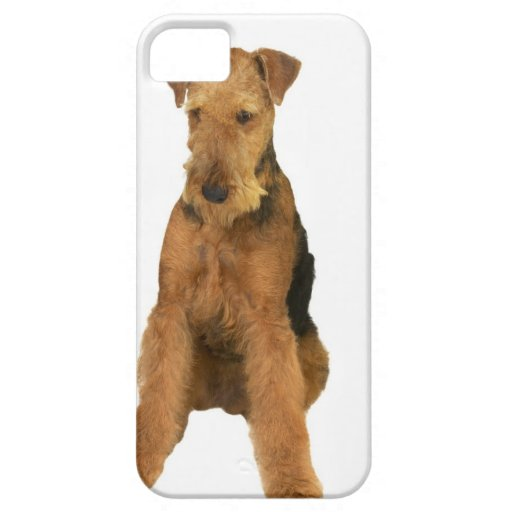 Close up of an airedale terrier iPhone 5 case