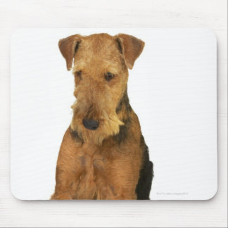 Close up of an airedale terrier mouse pad