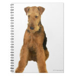 Close up of an airedale terrier note book