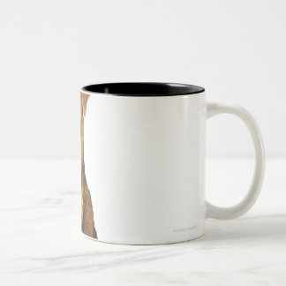 Close up of an airedale terrier Two-Tone coffee mug