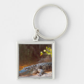 Close up of an american alligator at the J.N. Keychain