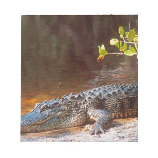 Close up of an american alligator at the J.N. Notepad