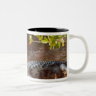 Close up of an american alligator at the J.N. Two-Tone Coffee Mug