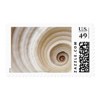Close-up of an animal shell postage