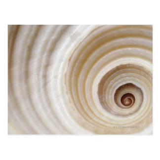 Close-up of an animal shell postcard