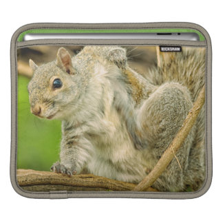 Close-up of an Eastern Gray Squirrel scratching iPad Sleeve