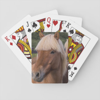 Close up of an Icelandic horse Playing Cards