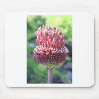Close Up of An Ornamental Onion or Drumstick Alliu Mouse Pad