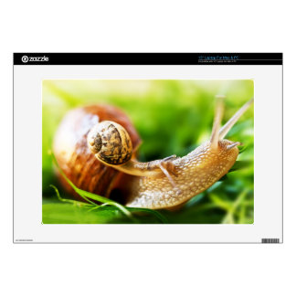 Close up of baby snail on adult snail laptop skins