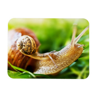 Close up of baby snail on adult snail magnet