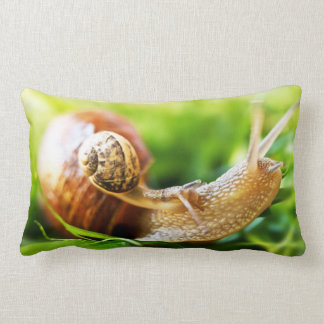 Close up of baby snail on adult snail pillows