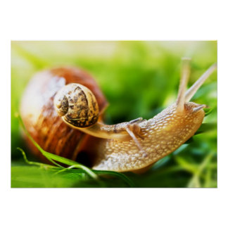 Close up of baby snail on adult snail poster