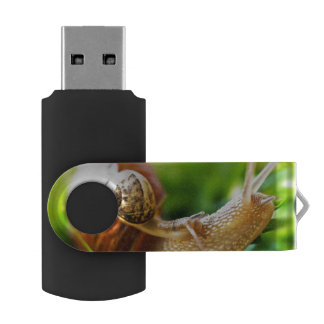 Close up of baby snail on adult snail USB flash drive