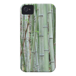 Close-up of bamboo grove iPhone 4 cover