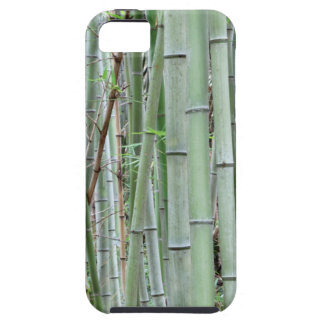 Close-up of bamboo grove iPhone SE/5/5s case