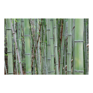 Close-up of bamboo grove poster