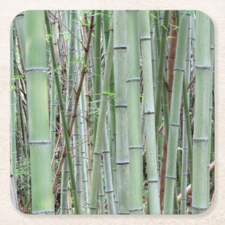 Close-up of bamboo grove square paper coaster