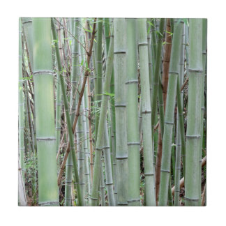 Close-up of bamboo grove tile