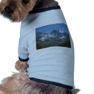 Close Up of Bano Morales at el Morado Dog Clothing