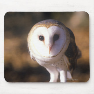 'Close-up of Barn Owl, Land Between Lakes, KY' Mouse Pad