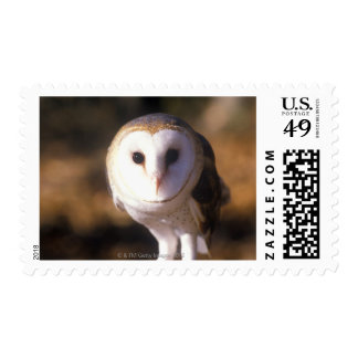 'Close-up of Barn Owl, Land Between Lakes, KY' Stamp