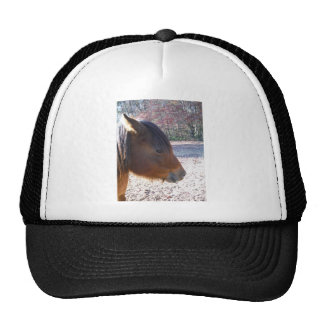 Close up of Brown horse, Little Brown Pony Trucker Hat