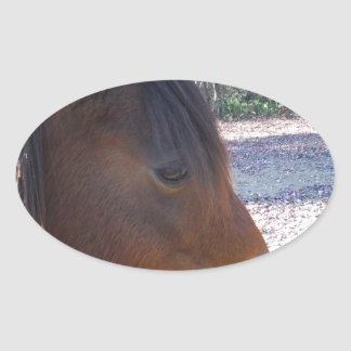Close up of Brown horse, Little Brown Pony Oval Sticker