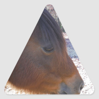 Close up of Brown horse, Little Brown Pony Triangle Sticker