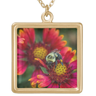 Close-up of bumblebee with pollen basket gold plated necklace