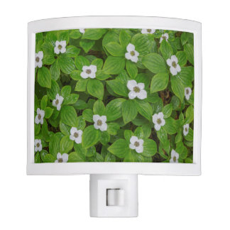 Close-up of bunchberry with white flowers night lights