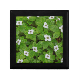 Close-up of bunchberry with white flowers gift boxes
