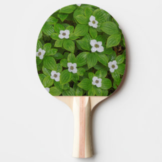 Close-up of bunchberry with white flowers ping pong paddle