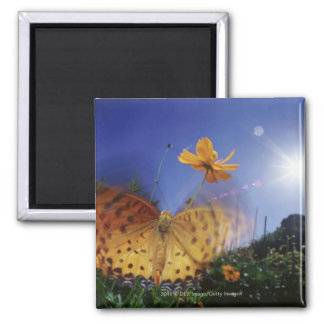 Close-up of Butterfly, flapping wings 2 Inch Square Magnet